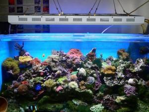 120W Aquarium LED Light