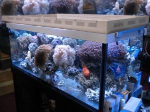 90W Aquarium LED Light
